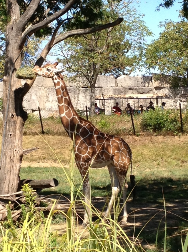 We like the walruses, but the giraffes are pretty cool, too.