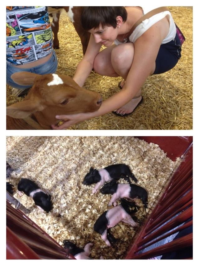 Little baby cows and pigs -- oh my goodness!
