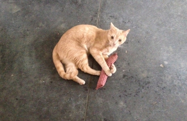 Jackson: The catnip makes me feel a little hiiiiiigh ....