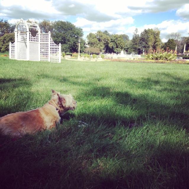 Precious chillaxin' at the park.